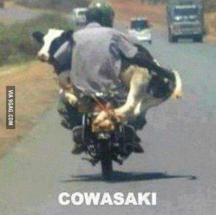 South African Cowasaki
